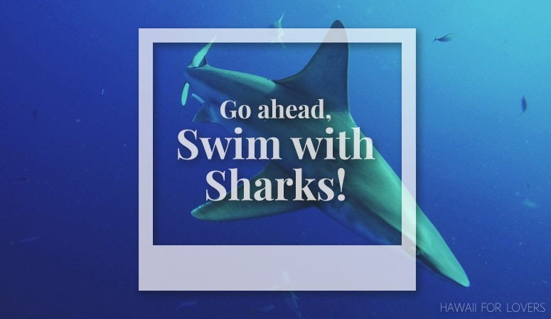 swim with sharks